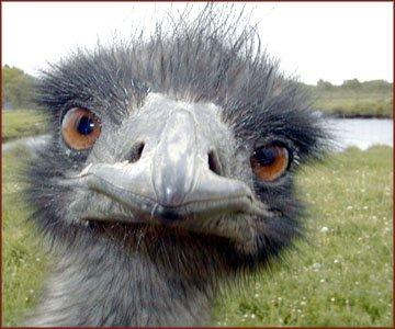 C'est le trois cent soixante dix neuvième fafiot! dans déconno-news emeu