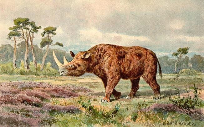 rhinocroslaineux.jpg